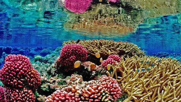 Coral reefs - Sputnik International