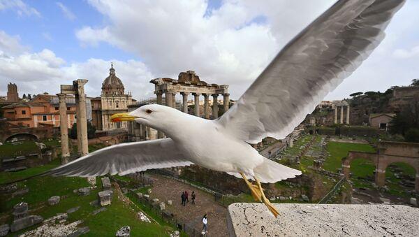 A seagull flies near the Ancient Forum in Rome in March 2020 - Sputnik International