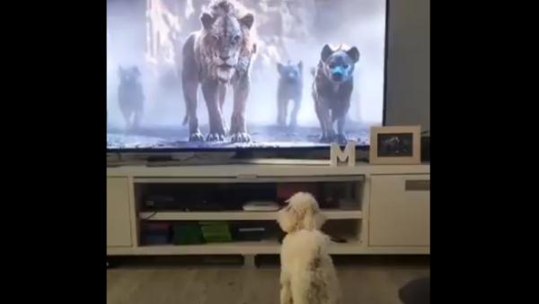 Be Prepared! Cute Doggo Spooked by Kids' Movie - Sputnik International