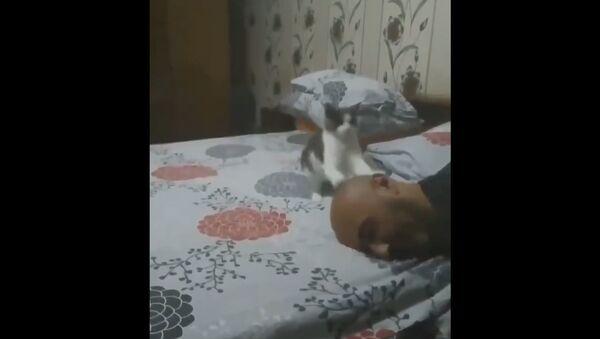 Kitten Plays With Man - Sputnik International