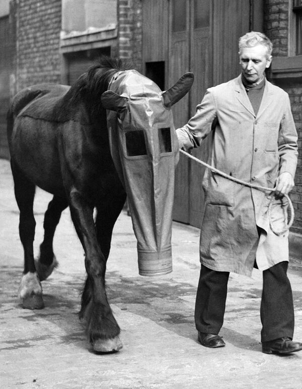 A horse equipped with a gas mask as a precaution against gas attacks. London, 27 March 1940 - Sputnik International