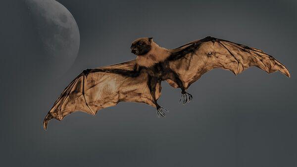 Bat - Sputnik International