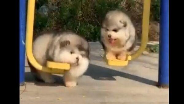 Dogs fun - Sputnik International