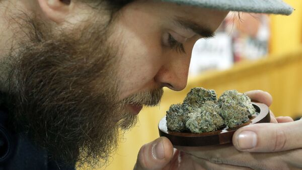 In this In this Dec. 17 2017 file photo, Julian Clark, of Westerly, R.I., smells a strain of marijuana flowers called Cookie Pebbles, at a trade show in Worcester, Mass. Three New England states legalized recreational marijuana, but there is still no place to buy pot legally in the region. Sunday, July 1, 2018, had been the target date to open pot shops in Massachusetts, but no retail licenses have yet been awarded. Possession of small amounts of recreational marijuana becomes legal in Vermont that day, but the law has no provisions for retail sales. Pot shops aren't expected in Maine until 2019 at earliest. - Sputnik International
