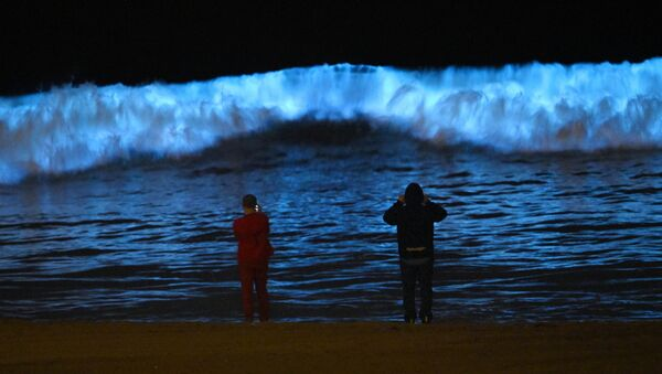 Spectators watch bioluminescent plankton light up the shoreline as they churn in the waves at Dockweiler State Beach during the coronavirus outbreak, Wednesday, April 29, 2020, in Los Angeles, Calif. - Sputnik International