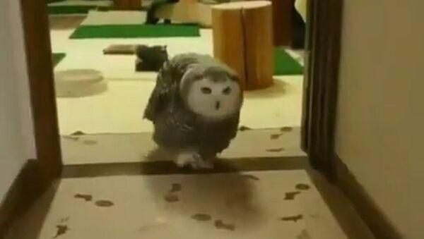 Owl - Sputnik International
