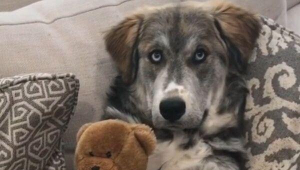 'Who's Your Best Friend?': Cute Pup Shows Off His Best Pal   - Sputnik International