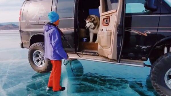 Cute Yet Strange: Malamute Scared of Ice in Russia  - Sputnik International