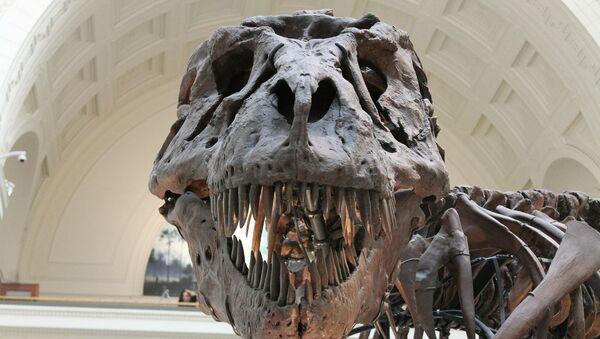 dinosaur's skeleton  - Sputnik International
