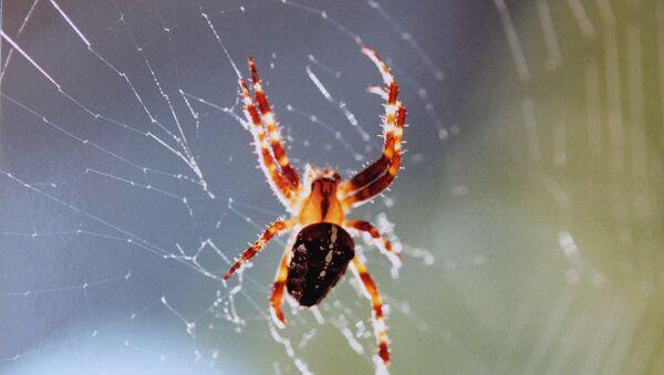 a spider - Sputnik International