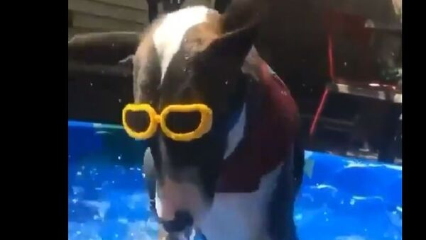 Dog in a pool - Sputnik International