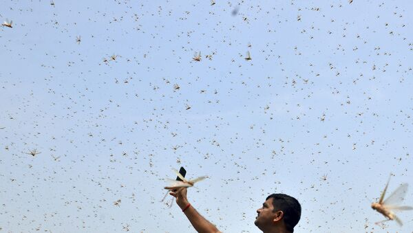 A man takes pictures of swarms of locusts in a residential area of Allahabad on 11 June 2020.  - Sputnik International
