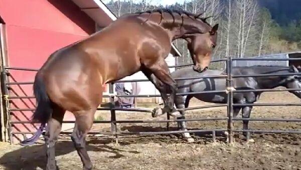 Horse - Sputnik International