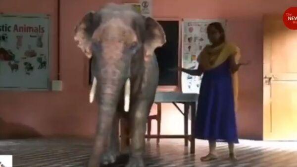 Elephants, cows in class: Kerala school uses augmented reality in online lessons.!м - Sputnik International