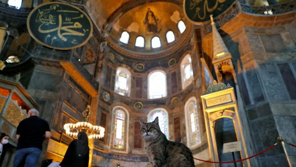 Gli the cat of Hagia Sophia or Ayasofya, a UNESCO World Heritage Site which was a Byzantine cathedral before it was converted into a mosque and currently a museum, is pictured in Istanbul, Turkey, July 2, 2020. - Sputnik International