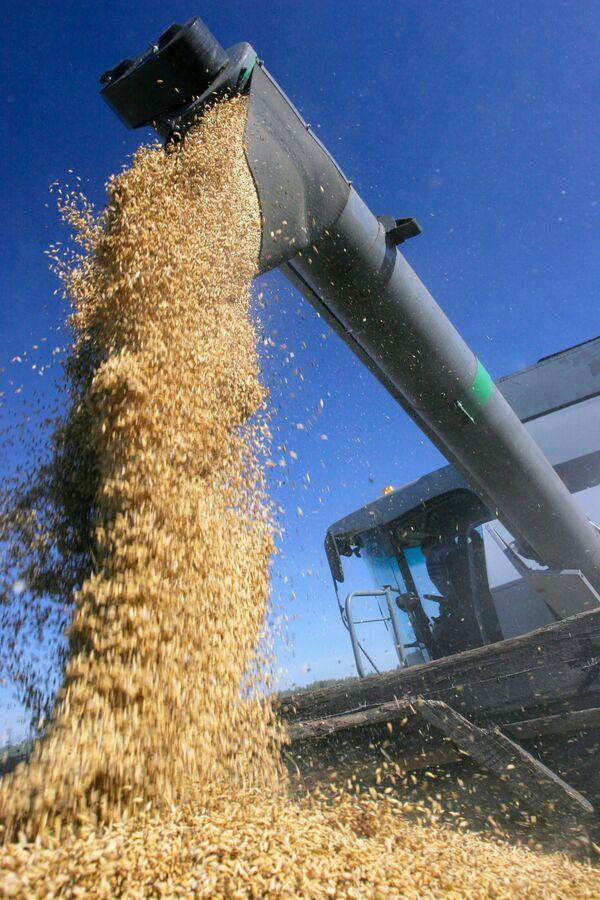 Russia, Egypt reach accord on grain supplies after wheat row  - Sputnik International