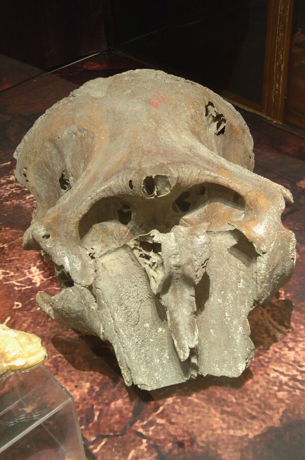 Million-year-old mammoth skeleton found in Serbia - Sputnik International