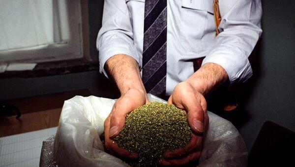 marijuana - Sputnik International