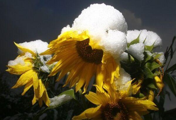 Germany, Austria and Poland hit by snowstorms 2 - Sputnik International