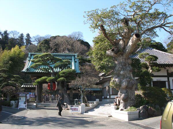 Kamakura, an ancient capital of Japan - Sputnik International
