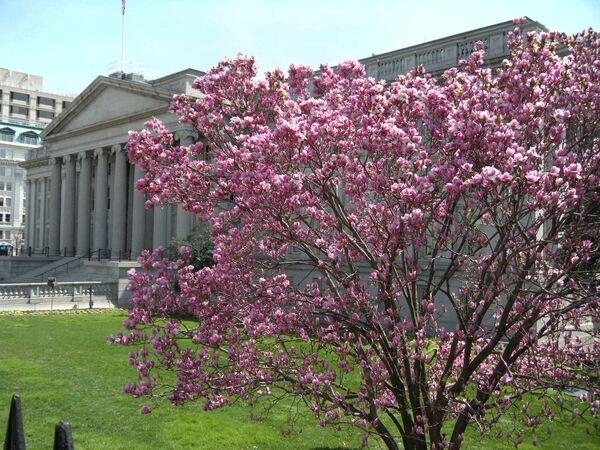 Spring comes to Washington - Sputnik International