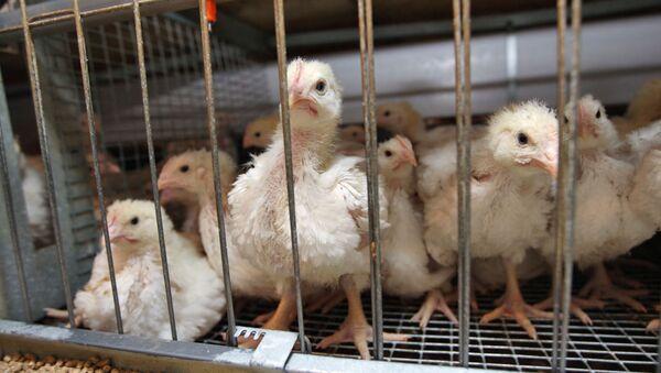 Poultry - Sputnik International