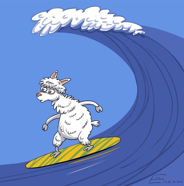 Peruvian alpaca learns to surf  - Sputnik International
