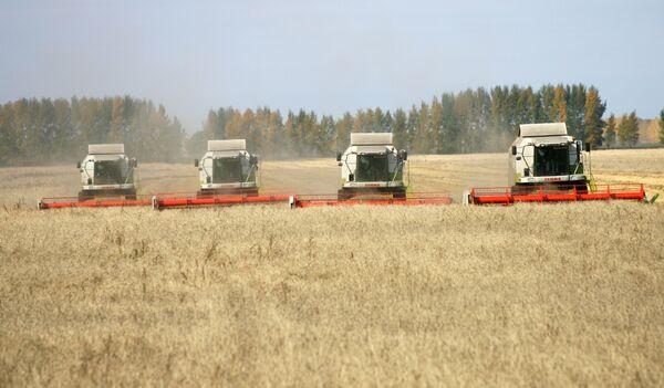 Russian grain harvest could fall 38% y-o-y  - Sputnik International