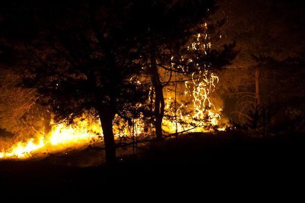 Wildfires extinguished in 5 Russian regions - Sputnik International