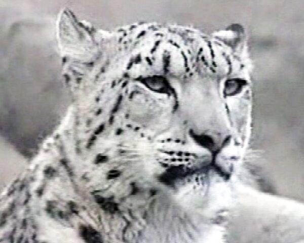 Sayano-Shushensky nature reserve: the land of friendly beasts - Sputnik International