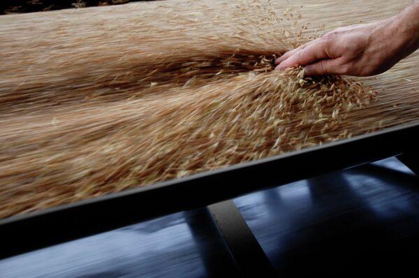 Russian ban on grain export has intended effect - Sputnik International