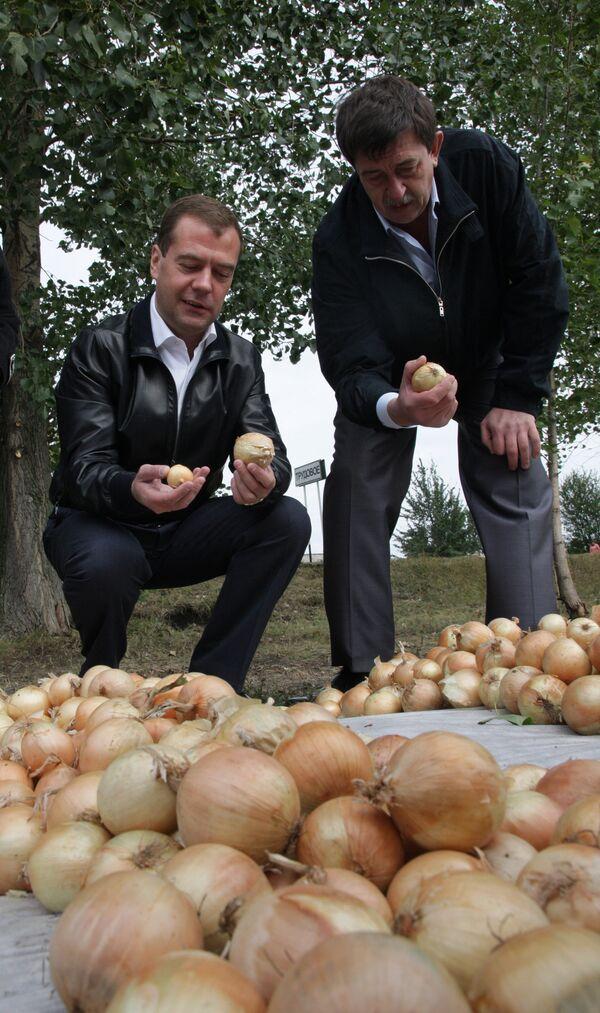 Dmitry Medvedev in potato fields - Sputnik International