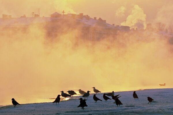 Mass bird deaths do not mean the end is nigh - scientists - Sputnik International