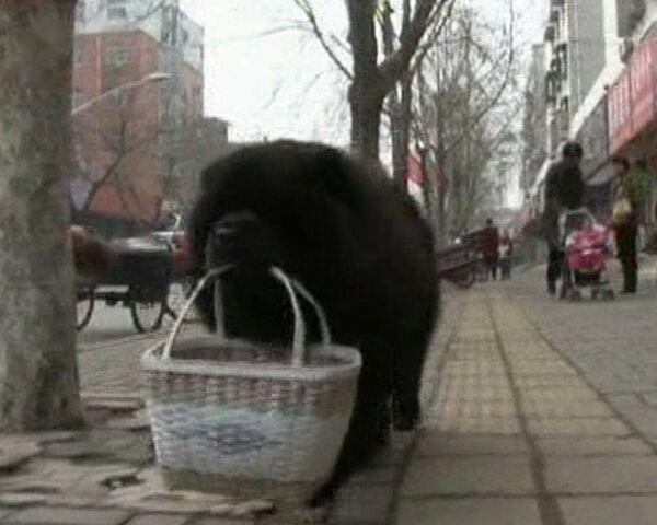 A shopping dog  - Sputnik International