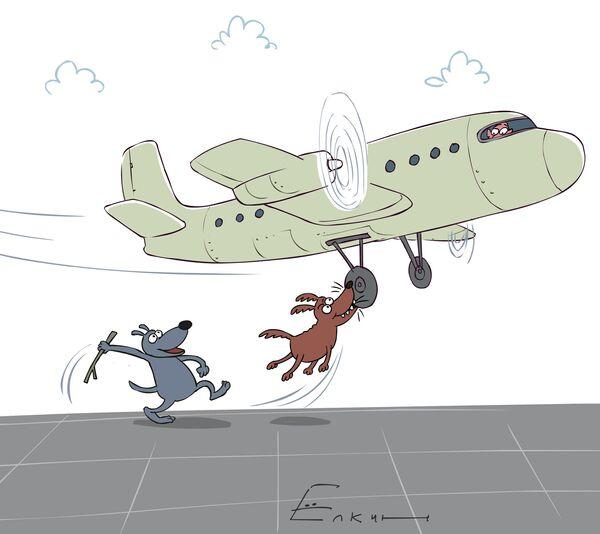 Dogs obstruct plane from landing in Siberia - Sputnik International