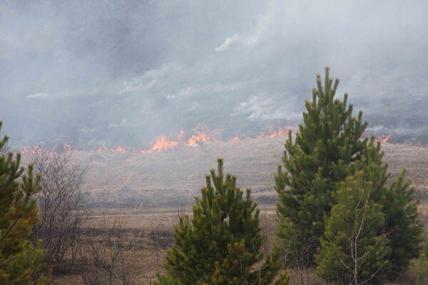 Firefighters battle raging wildfires in Siberia - Sputnik International