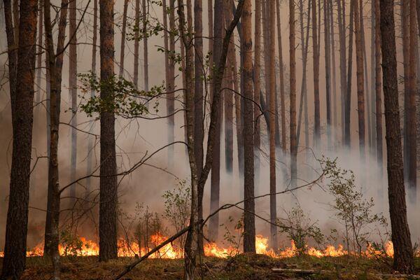 Wildfire area spreads in Siberia - Sputnik International