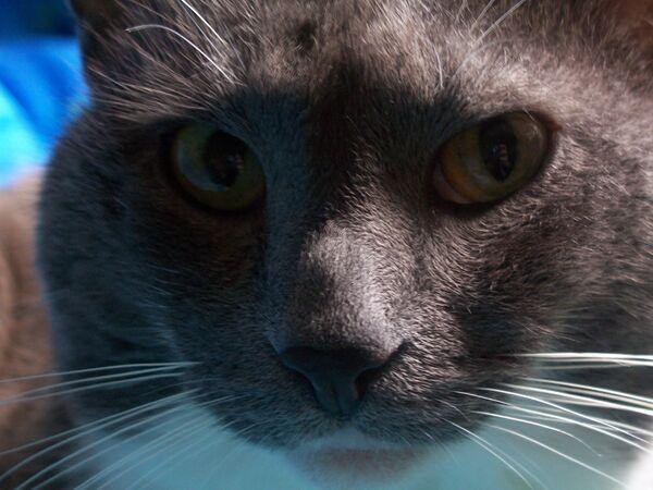 Siberian woman finds pet cat month after jet crash - Sputnik International