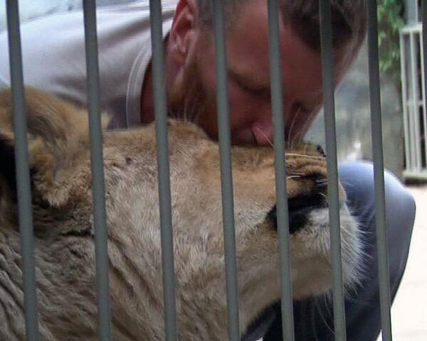 A brave Ukrainian lives in a lion's cage - Sputnik International