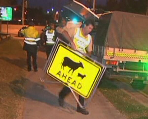 Wild deer run rampage through Australian town - Sputnik International