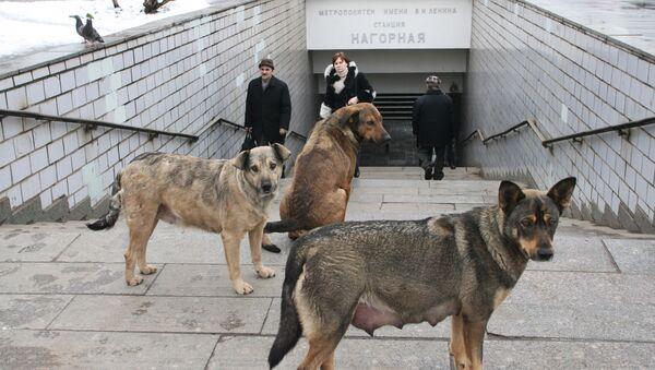 Moscow to spend $76 million on stray dogs in 2012-2014 - Sputnik International