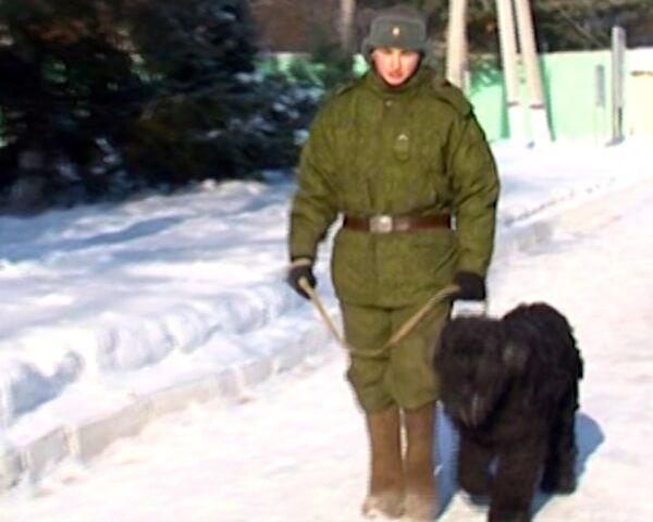 Can Dogs Serve in the Army? A Video Tour of the Krasnaya Zvezda Kennel - Sputnik International