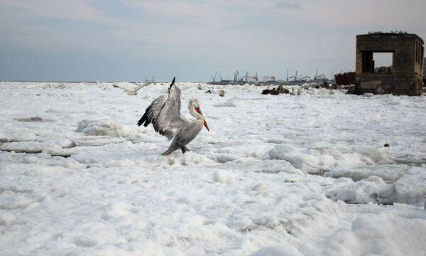 Scientists Seek Funding for Glacier Projects - Sputnik International