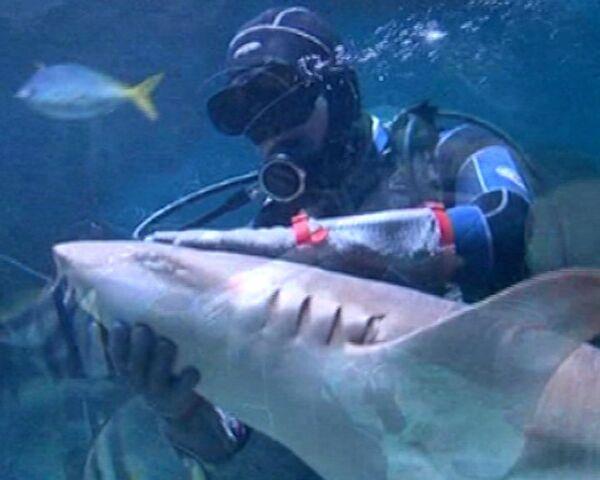 Diver Feeds, Kisses and Dances With Sharks   - Sputnik International