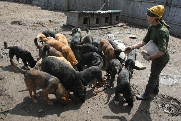 Zoya Andryushchenko and the Animals She Saves - Sputnik International