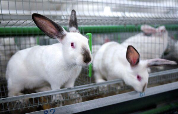 Russia, China Sign 9 Deals, Including on Rabbits - Sputnik International
