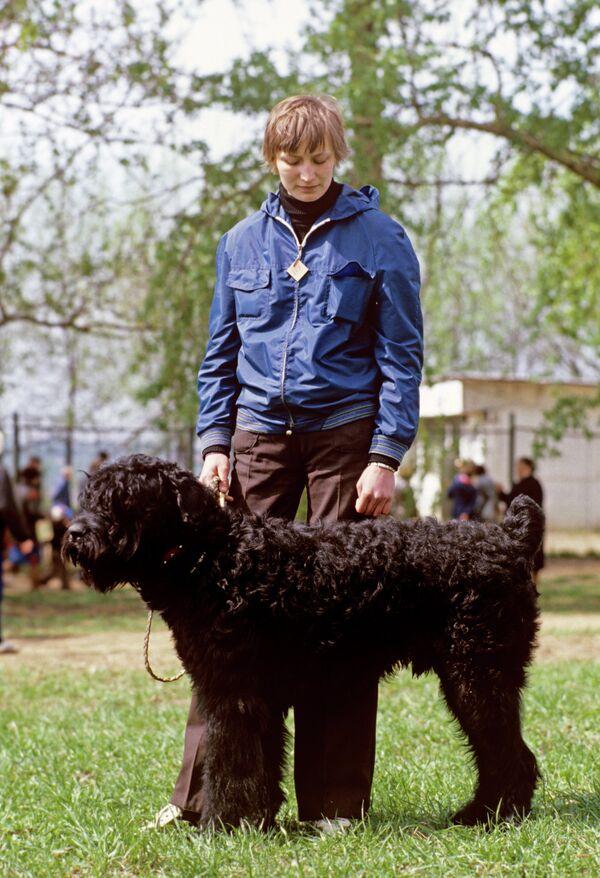 Black Russian Terrier - Sputnik International