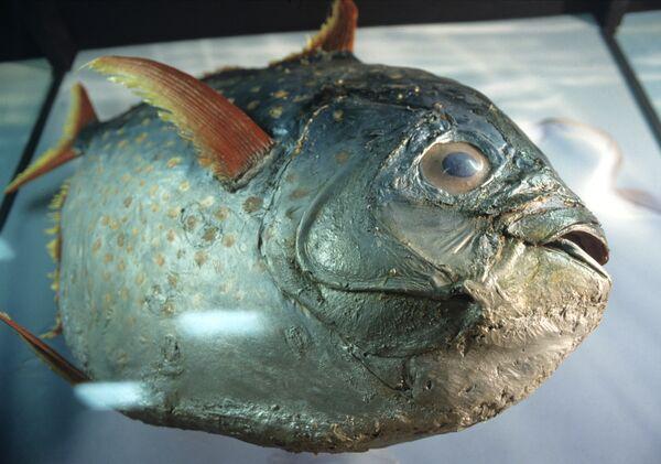 Piranhas Found in Greek-Turkish Border River - Sputnik International