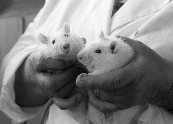 The gerbils were made deaf with a drug that killed nerve cells transmitting information from the ear to the brain - Sputnik International