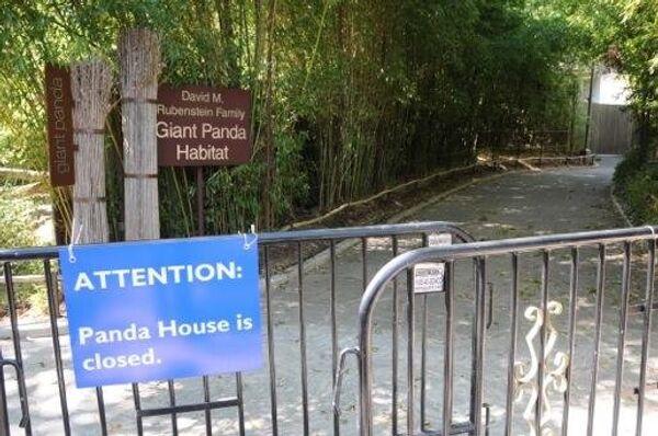 A sign outside the panda house  - Sputnik International